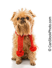 Dog  in a knitted scarf