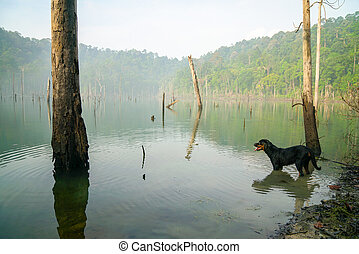 Dog in a misty swamp lake