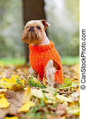 Dog  in a park  autumn.