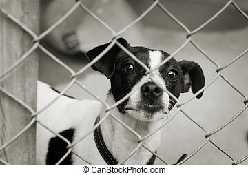 Dog in a pen