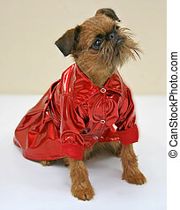 dog in a red coat