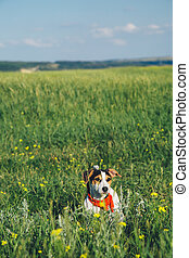 dog in a red scarf sitting in the grass