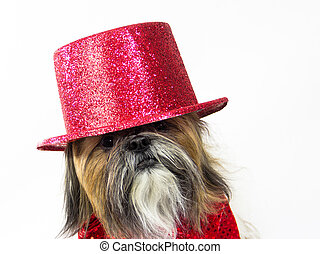 Dog in a Red Top Hat - A Shih Tzu in a glittery top hat has...