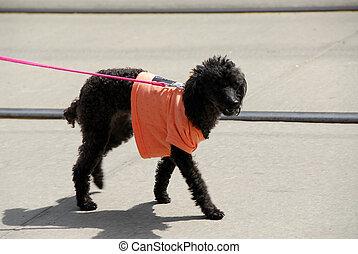 Dog in a shirt