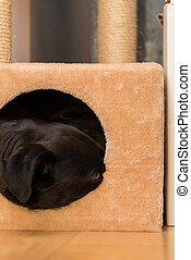 Dog in a small cuddly cave - close-up - Black dog looking...