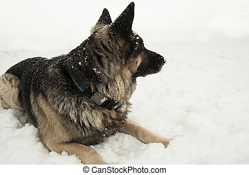 Dog in a Snow