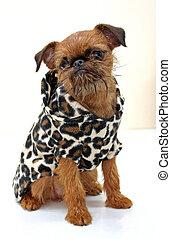 Dog in a spotty jacket
