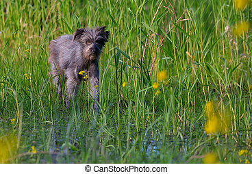 Dog in a swamp