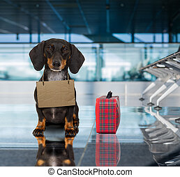 dog in airport terminal on vacation ready for transport in a...