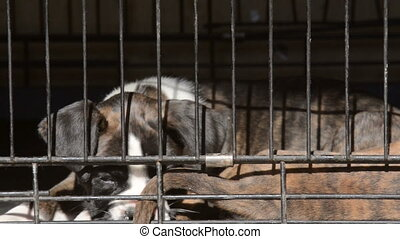 Dog in animal shelter - Small dogs in animal shelter closeup...