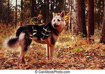 Dog in autumn forest