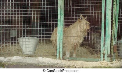 Dog in aviary in a dog shelter - Shaggy dog in aviary in a...