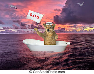 Dog in bathtub on sea after shipwreck