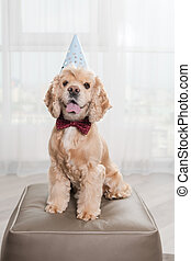 Dog in bow tie and party hat