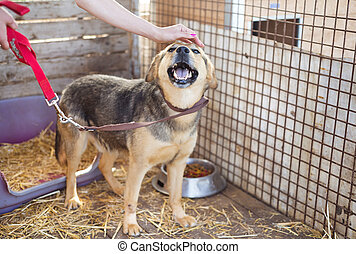 Dog in cage - A dog in an animal shelter, waiting for a home