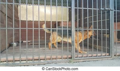 Dog in cage - German shepherd Dog in big cage