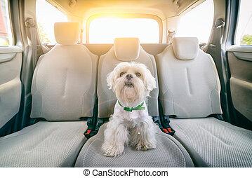 Dog in car sitting alone