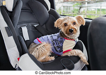 Dog in Child Seat