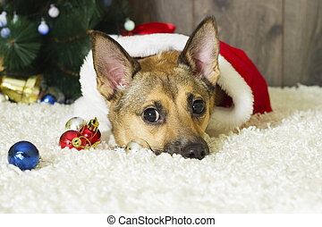 Dog in Christmas atmosphere