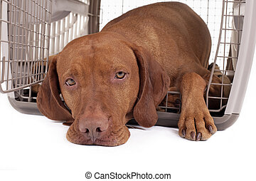 dog in crate - calm dog laying in his crate looking at the...