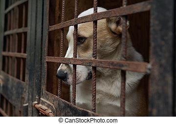 dog, in, de, dier, schuilplaats