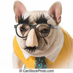 french bulldog disguised as a human