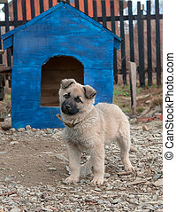 dog in dog house - funny dog in the dog house