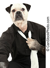 Dog in Dress Shirt and Tie