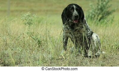 Dog in field itches