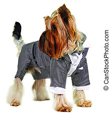 Dog in formal suit