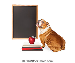 Dog In Front of Blank School Chalkboard