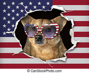 Dog in glasses behind the us flag