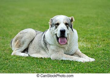 Dog in green grass