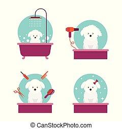 Bathing, Cutting, Combing, Hair Drying, Beauty