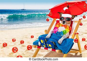 dog in hammock  as santa claus on christmas at the beach