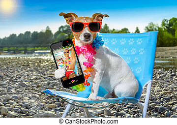 dog in hammock on summer
