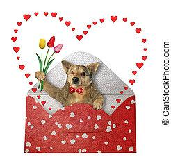 Dog in holiday envelope 2