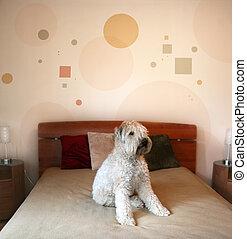 Dog in modern bedroom - Dog sitting on a bed in modern...