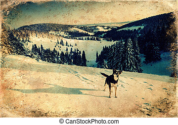 Dog in mountain winter landscape old photo effect. - Dog in ...