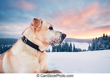 Dog in mountains in winter