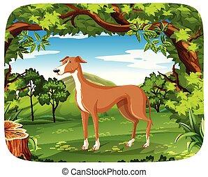 Dog in nature scene