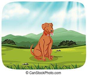 Dog in park scene