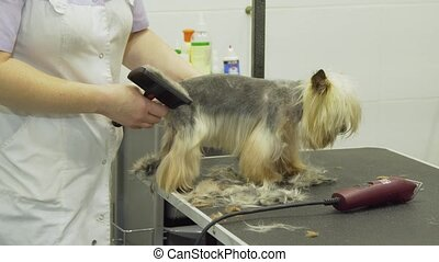 Dog in pet grooming salon.