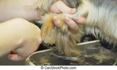 Dog in pet grooming salon.