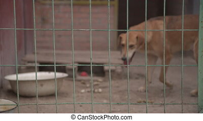 Dog in pet shelter