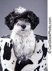 dog in photo studio