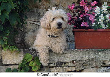 Dog in Provence