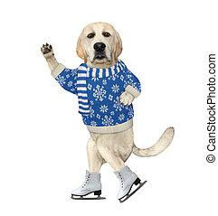 Dog in pullover skating