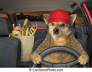 Dog in red cap driving car