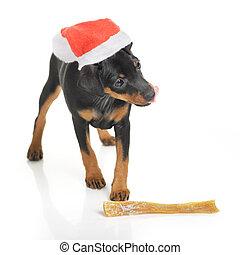 Dog in Santa hat